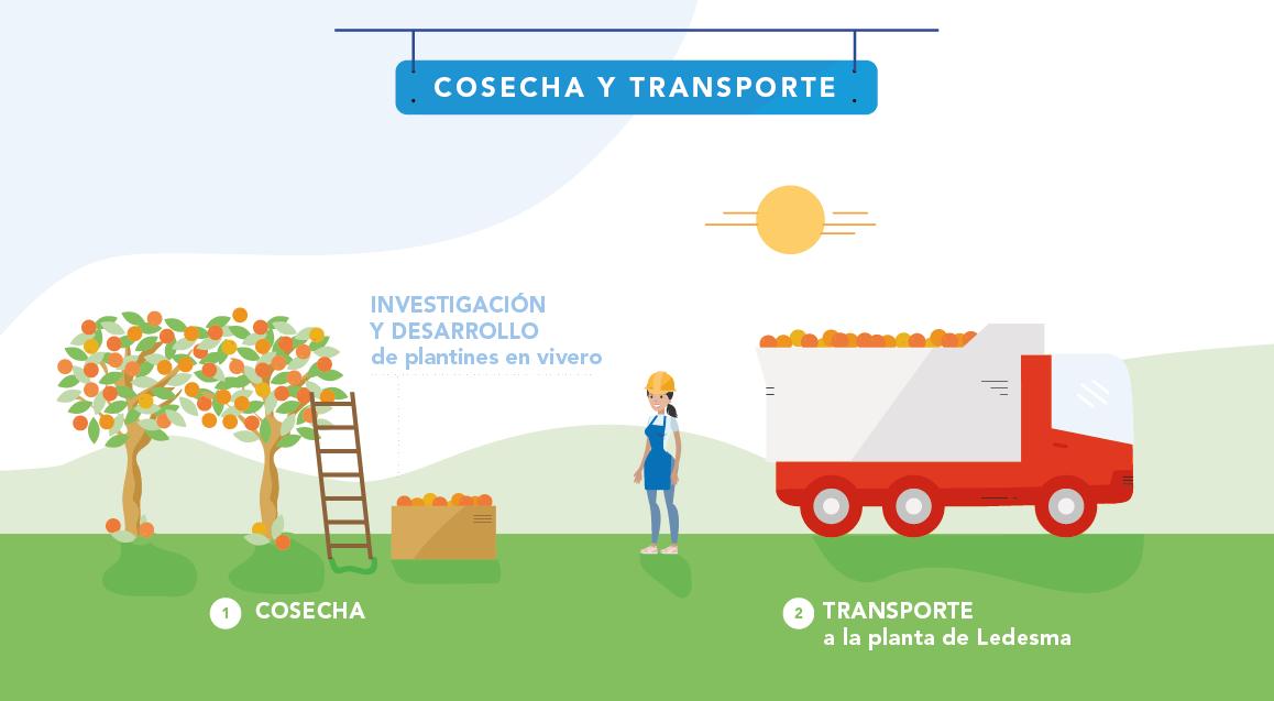 Proceso Cosecha y transporte Jugos y frutas slide 1