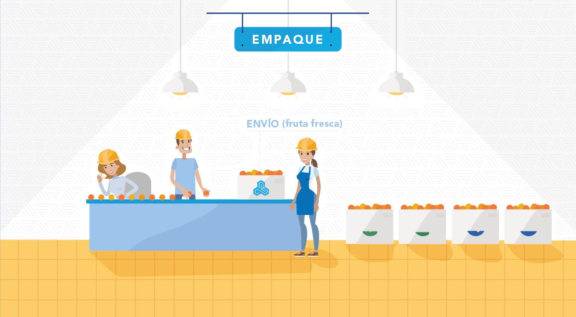 Proceso Empaque Frutas slide 4