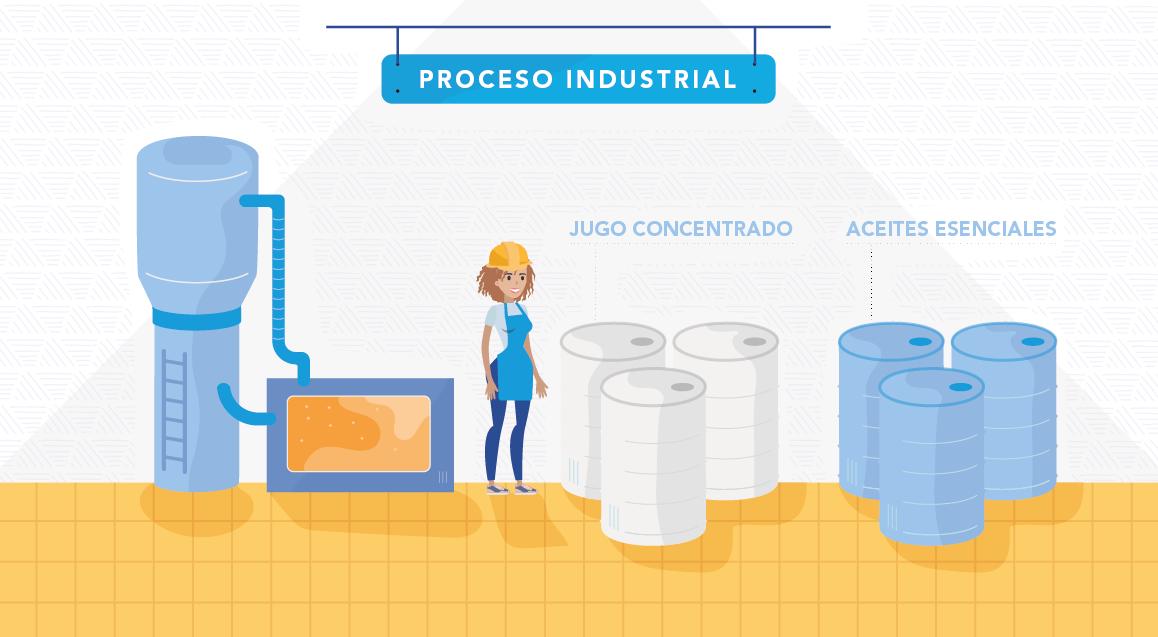 Proceso Industrial Frutas slide 5